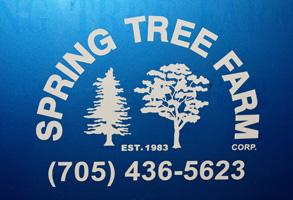 Spring Tree Farm